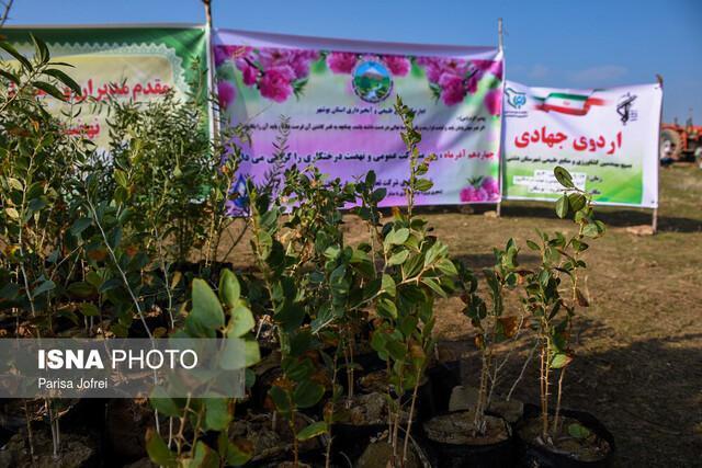 کاشت 30 هزار اصله درختچه تاغ در جهت رفسنجان -کرمان